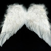 white wings