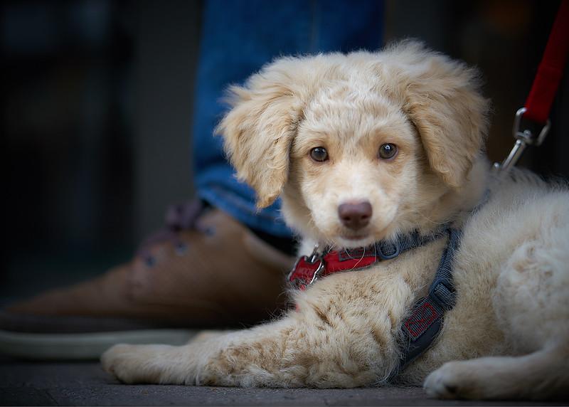 puppymar1317 6.jpg