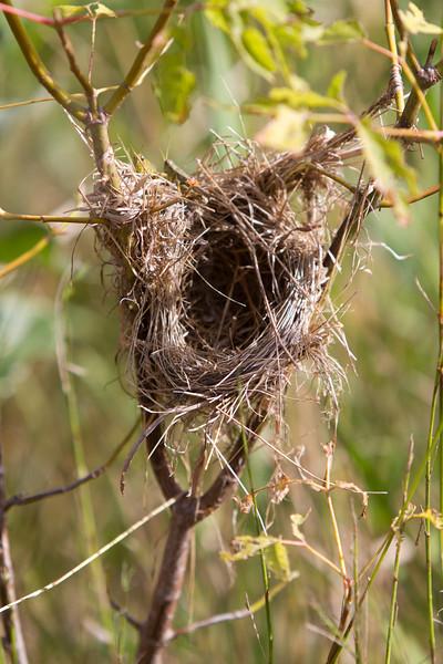 9-3-2013 Empty Nest