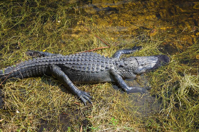 Everglades-29.jpg