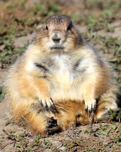 Prairie Dog 3.jpg