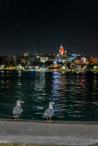 Seagulls galata night.jpg