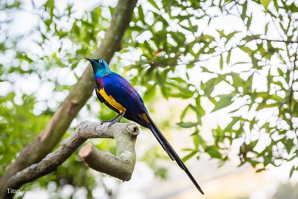 20170212綠世界鳥園
