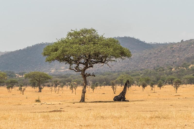Tanzania_Safari-best-96.jpg