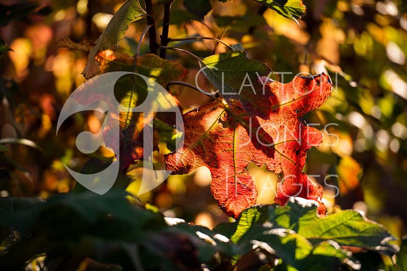 arboretum_leaf.jpg