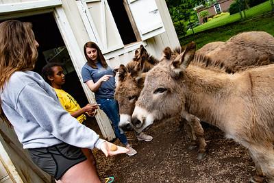 TN Donkey Patrol 5-15-19
