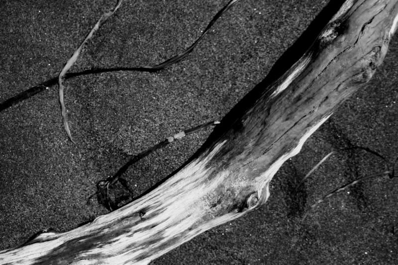 070705-003BW (Abstract; Driftwood, Seaweed, Sand).jpg