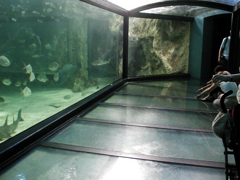54.  Sydney Aquarium.JPG