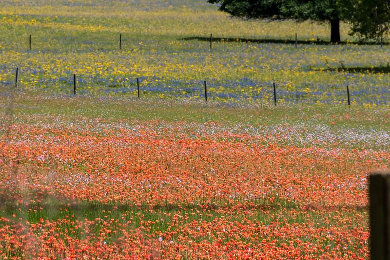 Texas Spring-0711.jpg