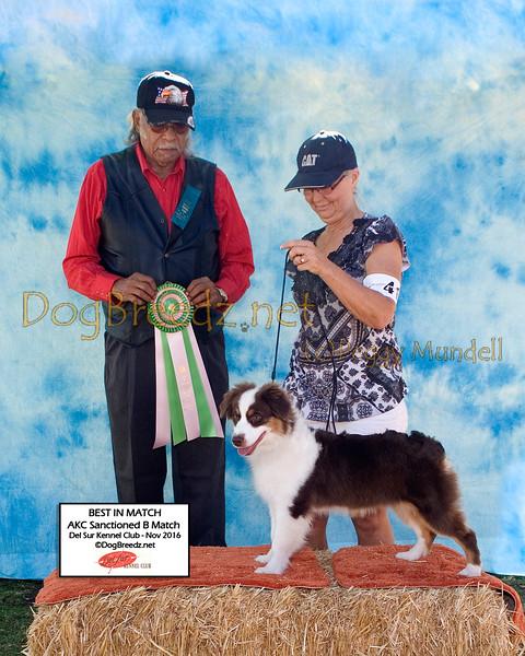 Del Sur Kennel Club Puppy Match November 2016