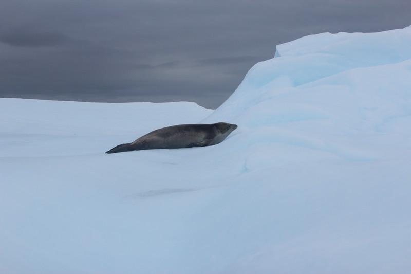 Antarctica 270.JPG