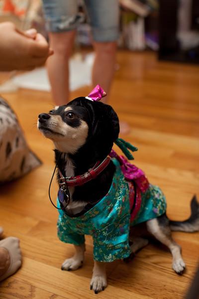 Dog-sushi-halloween2-11.jpg