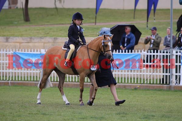 2009 09 28 Perth Royal Show Leading Rein
