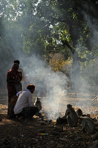 Pilgrims feeding langur monkeys near the fort in Ranthambore national park