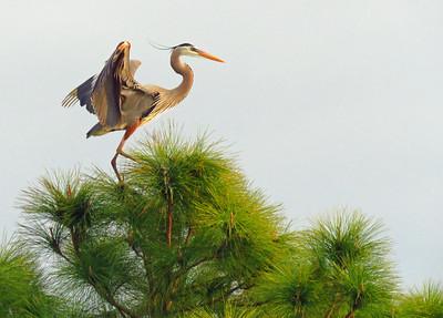 Escapin' #5 BIRDS-2