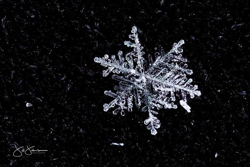 snowflakes-1186.jpg