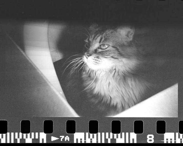 mark film scan-015.jpg