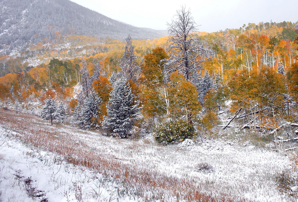 . Fresh snow covers a hillside where Aspen trees turn yellow each Autumn, near Frisco, Colo., Friday Oct. 4, 2013. Powerful storms moved into the Midwest on Friday due to a cold weather system gaining strength as it traveled east from Colorado and Wyoming. (AP Photo/Brennan Linsley)