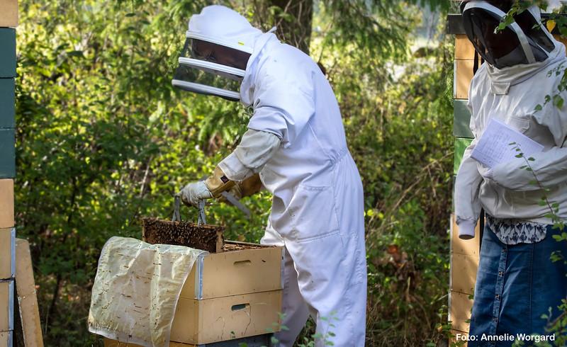 Bee_article_1.jpg