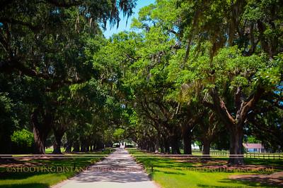 Avenue of the Oaks, Boone Hall