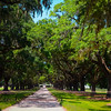 Avenue of the Oaks, Boone Hall