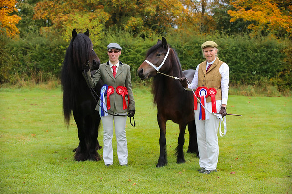 Sparket Equestrian Showing Show October
