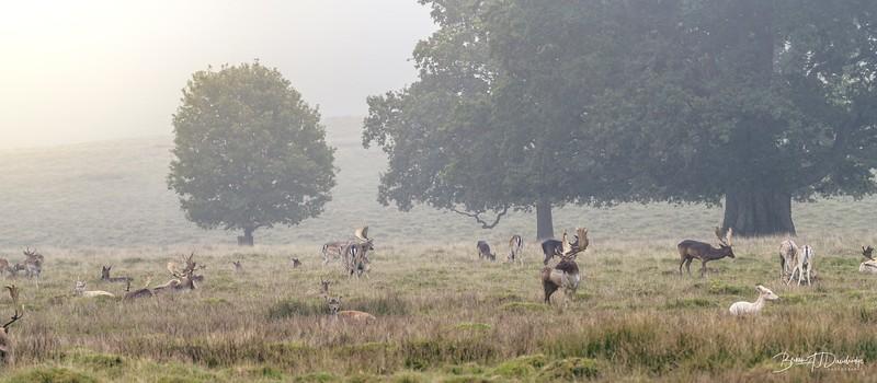 Petworth Deer Park-4122-Edit.jpg
