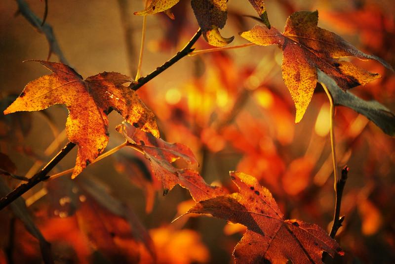 LTD_2012-11-29_0411_2