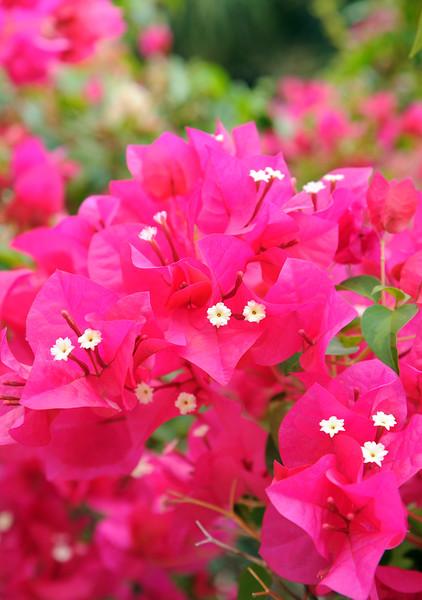 20120726_Nature_120.jpg