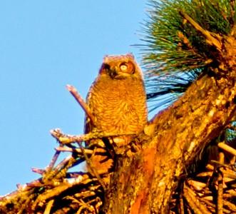 OBA Owls