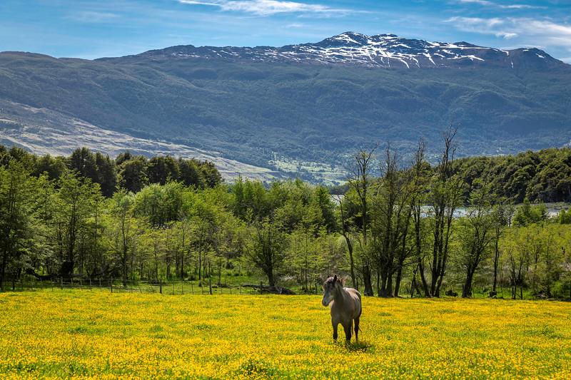 Patagonia_D850_1812_5355_4k.jpg