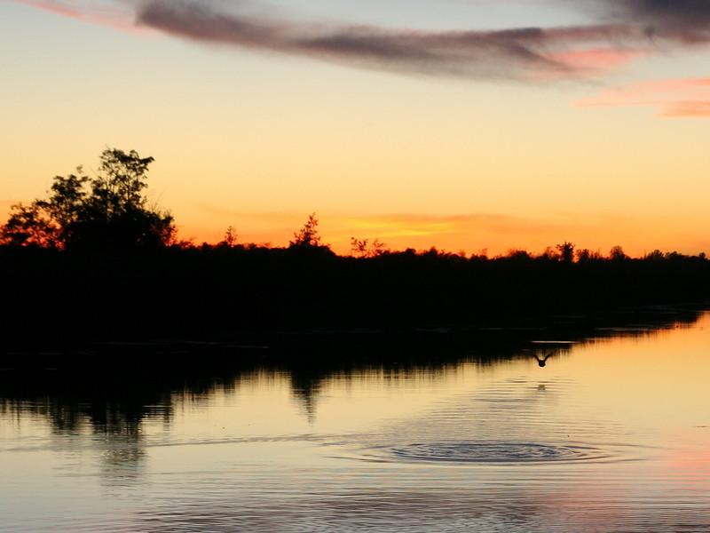 sunset_duck_03_10212007.jpg