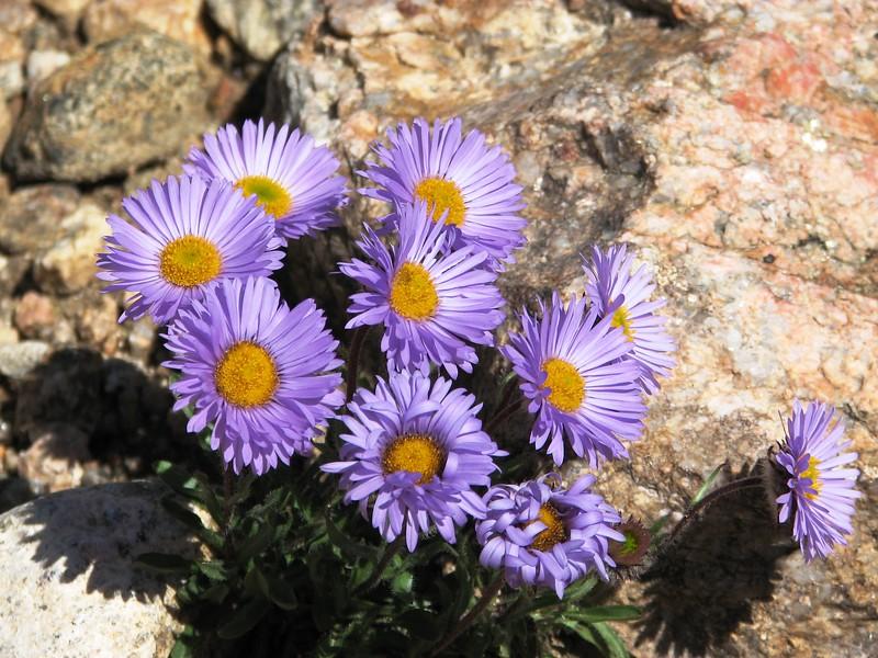 amh FLOWERS (1420).jpg
