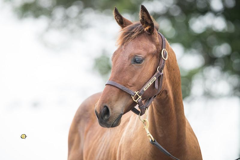 Runhappy - Queen of America '18 at Claiborne Farm 8.15.18.