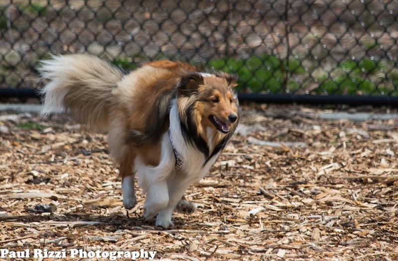 DogPark-9603.jpg