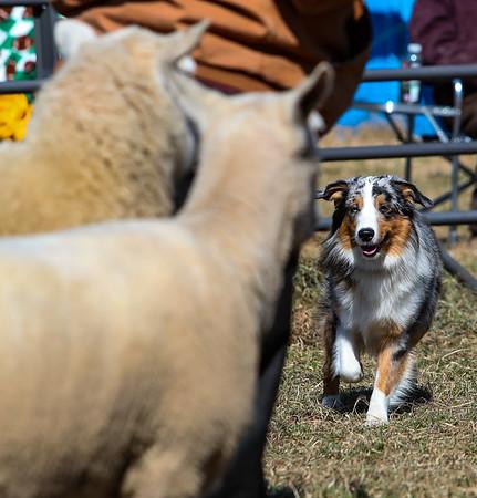 Jynx Herding Seminar Valparaiso March 2019