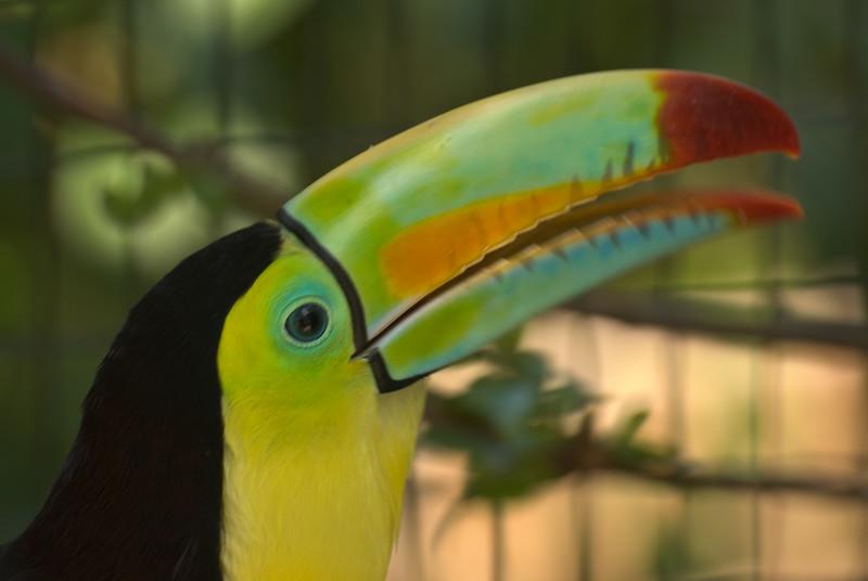 Costa Rica (110 of 104)