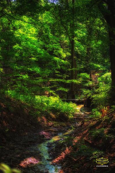 FernWoodForest36x24-9998logo.jpg