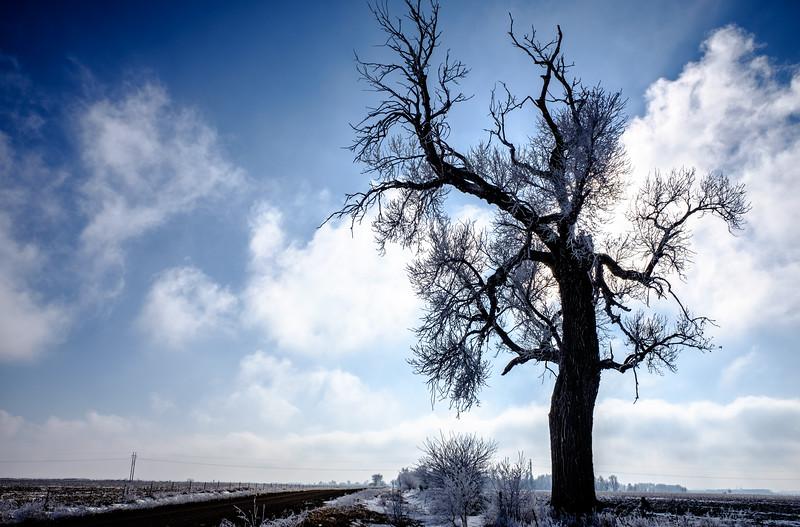 Tree Along the Road