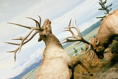 Hall of North American Wildlife