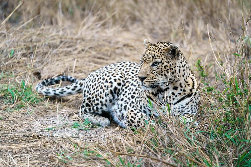 LeopardHills-20171021-0095.jpg