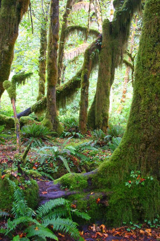 Rainforest_21aug04 030.jpg