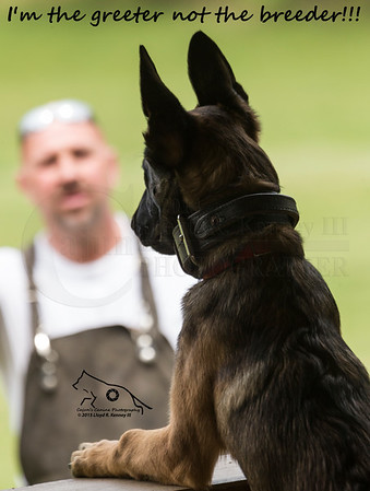 Service Dogs of America 2015 Spring Trials