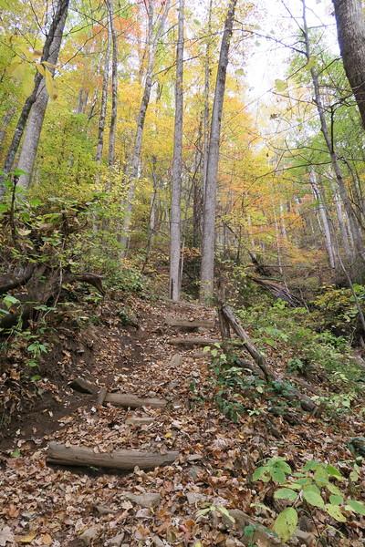 Farlow Gap Trail -- 3,420'