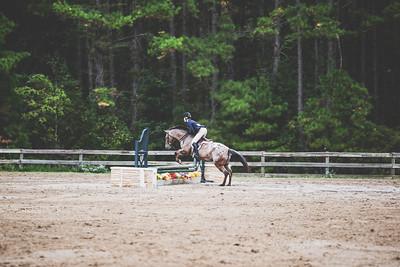 Cavallo | Horse Show