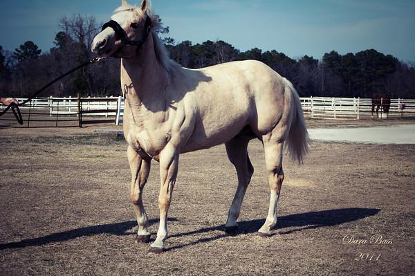 Shefka's Horses