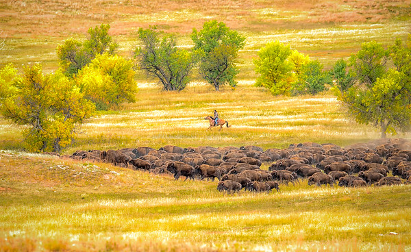 Mt Rushmore-Custer-WildHorse Sanctuary Photo Trip