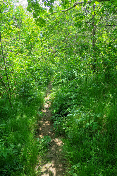 Art Loeb Trail -- 5,880'