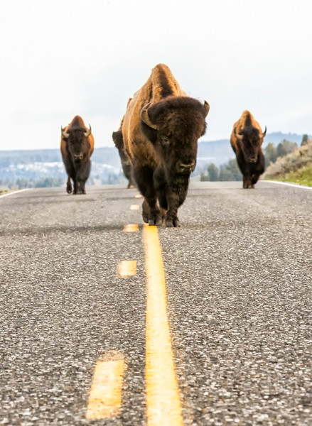 Yellowstone_May_2014_FH0T1489-2.jpg