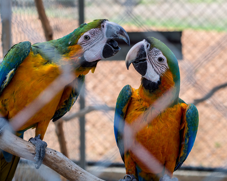 Parrots in Melios Zoo
